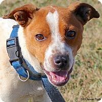 Adopt A Pet :: Bingo - Bedford, VA