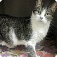 Adopt A Pet :: Mrs. Beasley - Indianola, IA