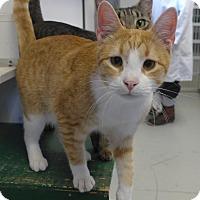 Adopt A Pet :: Daniel - Manning, SC
