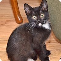 Adopt A Pet :: Wren - Davis, CA
