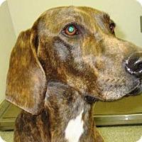 Adopt A Pet :: Jed - Lincolnton, NC