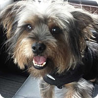 Adopt A Pet :: Angus - Statewide and National, TX