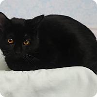 Adopt A Pet :: Elfie - Chippewa Falls, WI