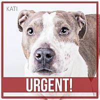 Adopt A Pet :: Kati - Decatur, GA