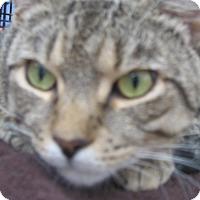 Adopt A Pet :: JOSIE - New york, NY