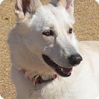 Adopt A Pet :: Snowy - Phoenix, AZ