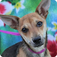 Adopt A Pet :: MARGO - Red Bluff, CA