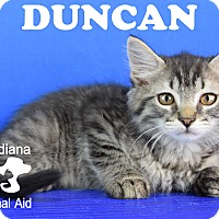 Adopt A Pet :: Duncan - Carencro, LA