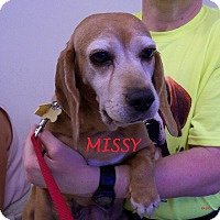 Adopt A Pet :: MISS MISSY - Ventnor City, NJ
