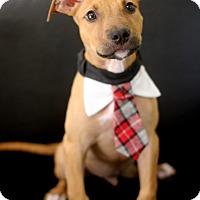 Adopt A Pet :: Tucker - Dalton, GA