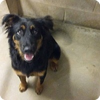 Adopt A Pet :: Lucy in CT - Manchester, CT