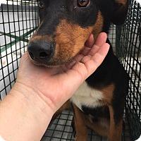Adopt A Pet :: Adams - Lewisburg, TN
