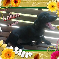 Adopt A Pet :: Laken meet me 8/19 - Manchester, CT