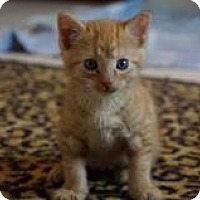 Adopt A Pet :: Sundance - Union, KY