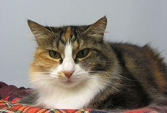 Domestic Longhair Cat for adoption in Kingston, Washington - Leelah