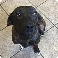 Adopt A Pet :: Remmy 110717 - Joplin, MO