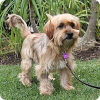 Adopt A Pet :: RHETT - Newport Beach, CA