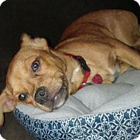 Adopt A Pet :: Odie - Springtown, TX