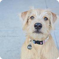 Adopt A Pet :: Zira - Salt Lake City, UT