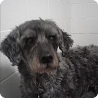 Adopt A Pet :: Riley #2 - Barnwell, SC