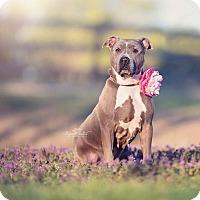Adopt A Pet :: Jenny - Wichita, KS