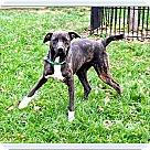 Adopt A Pet :: Savory
