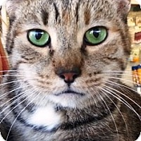 Adopt A Pet :: Simone - Pasadena, CA
