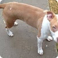 Adopt A Pet :: Trinity - Justin, TX