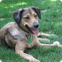 Adopt A Pet :: Hanna - Saskatoon, SK
