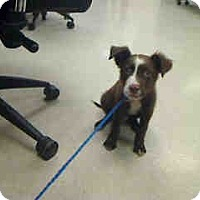 Adopt A Pet :: Pierre - Antioch, IL