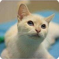 Adopt A Pet :: Maddie - Chicago, IL