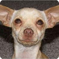Adopt A Pet :: Ellis - San Francisco, CA