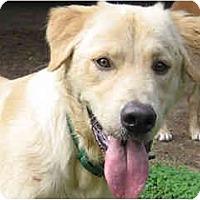 Adopt A Pet :: Josh - Scottsdale, AZ