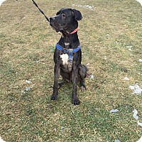 Adopt A Pet :: Zeus - Caledon, ON