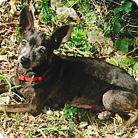 Adopt A Pet :: Ruthie - Homestead, FL