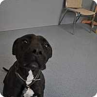 Adopt A Pet :: Nikita - Bay Shore, NY