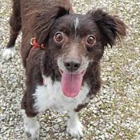 Adopt A Pet :: Jack - Holden, MO