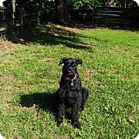 Adopt A Pet :: SOPHIA  (SRC#1732) IN NC - Lenoir, NC