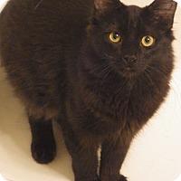 Adopt A Pet :: Isaboo - Quail Valley, CA