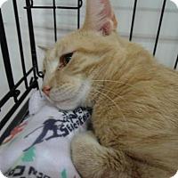 Adopt A Pet :: Dexter - Lancaster, PA