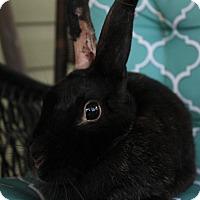 Adopt A Pet :: Pepper - Hillside, NJ