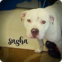 Adopt A Pet :: Sasha - Defiance, OH