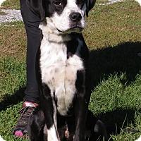 Adopt A Pet :: Jake - Unionville, PA