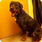Adopt A Pet :: PRIME