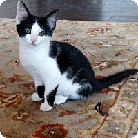 Adopt A Pet :: Chessie - Shelbyville, KY