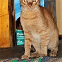 Adopt A Pet :: Milo - Jesup, GA