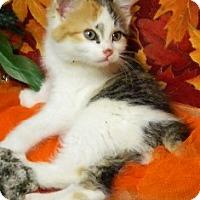 Adopt A Pet :: Marmalade - Columbus, NE