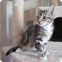 Adopt A Pet :: Confetti - San Bernardino, CA