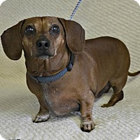 Adopt A Pet :: Tigger - Yreka, CA