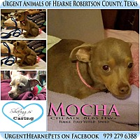 Adopt A Pet :: Mocha - Hearne, TX